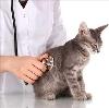 Ветеринарные клиники в Велегоже